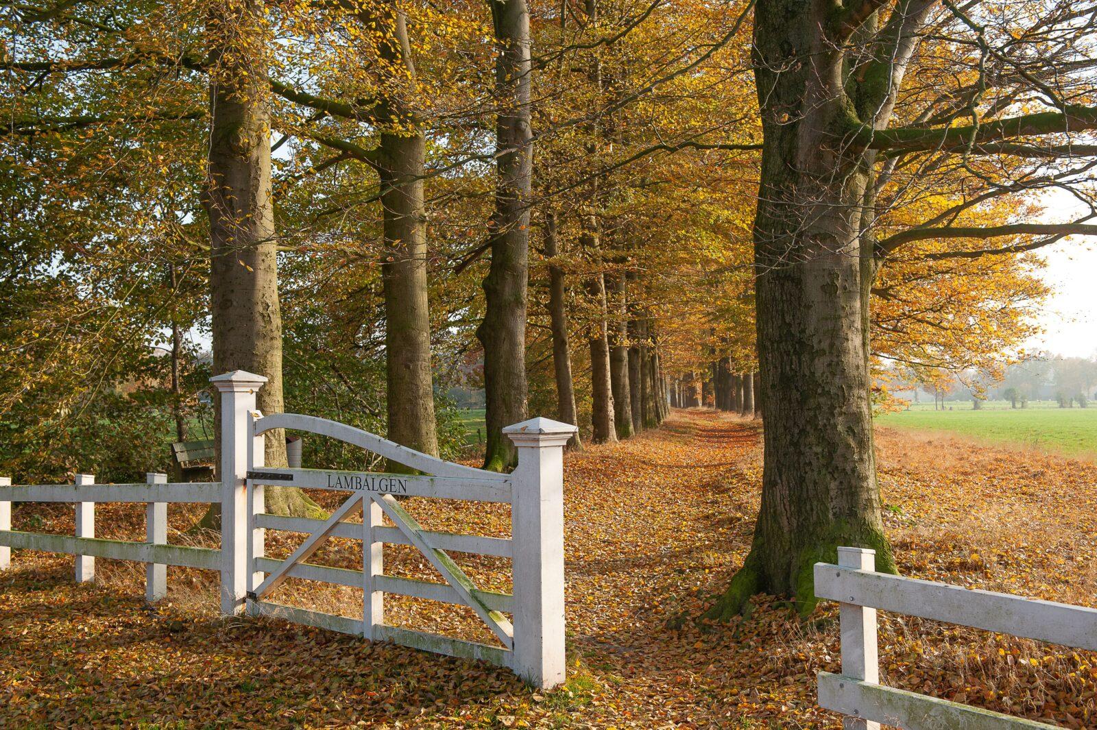 Het witte hek & pad